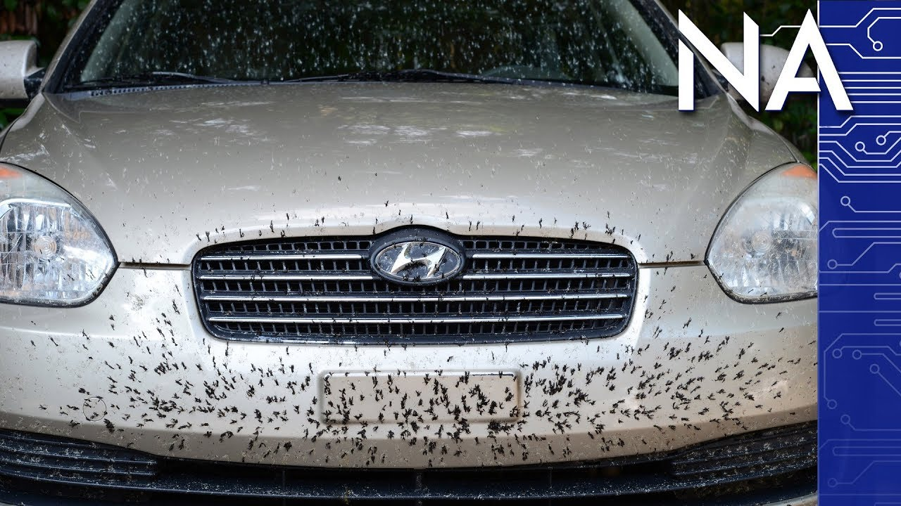 Why There Aren T As Many Dead Bugs On Your Car