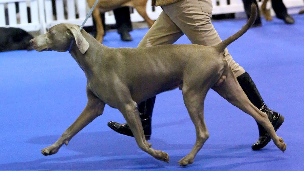 Best In Show National Dog Show