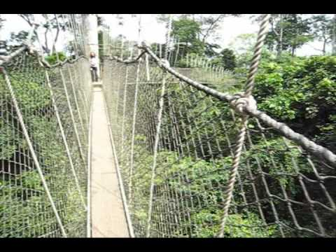 Kakum National Park Canopy Walk - Scared of Heights? (1st Person)