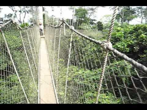 Kakum National Park Canopy Walk - Scared of Heights? (1st Person) & Kakum National Park Canopy Walk - Scared of Heights? (1st Person ...