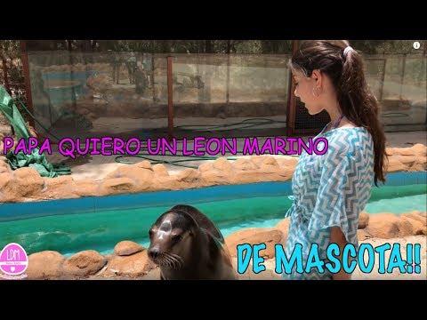 PAPA, QUIERO UN LEON MARINO DE MASCOTA! MI NUEVA MASCOTA/HABLO CON ANIMALES /LA DIVERSION DE MARTINA