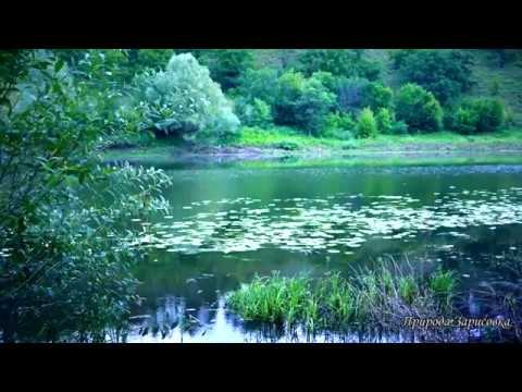 Звуки природы, пение птиц, звуки леса, для релаксации, сна.