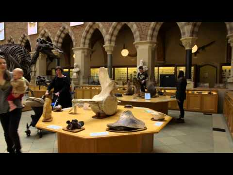 Oxford University Museum of Natural History: Museum of the Year 2015 finalist