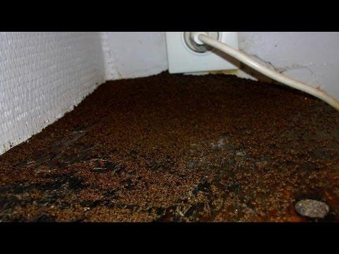 invasion de fourmis maison
