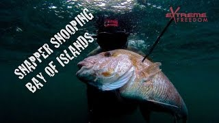 Snapper snooping in the Bay of Islands NZ with Extreme Freedom