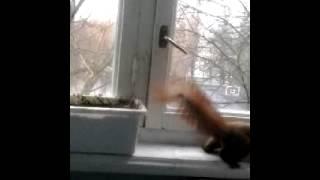 ахахахаха белка забежала ко мне в балкон