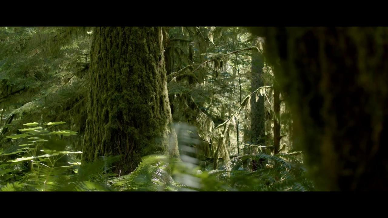 Blackmagic Pocket Cinema Camera 8K 'Nature'