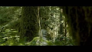 BMPCC4K Showcase: Nature