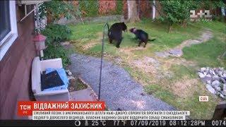 У США песик прогнав з подвір'я будинку дорослого ведмедя