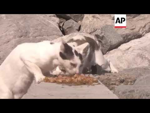 Abu Dhabi - Island home to colony of stray cats | Editor's Pick | 17 June 16