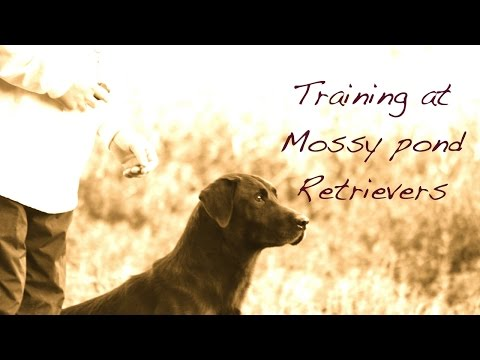 Gun Dog Training - The Place Command
