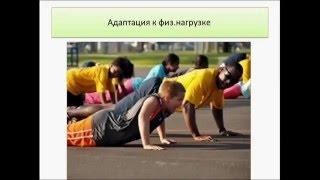 Работа скелетных мышц. Урок биологии.