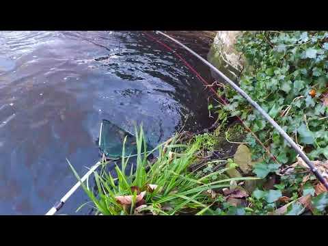 London FAST RIVER Fishing - BRUTAL Barbel+Trout/+Problem