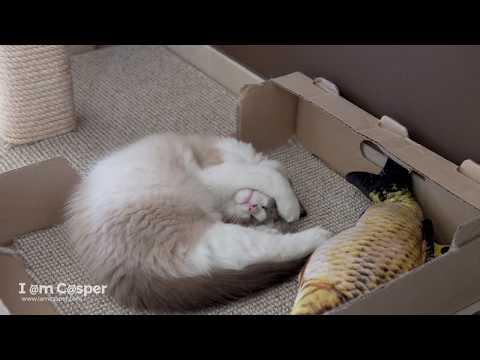10 BEST relaxing or sleeping spots for cats - Ragdolls Casper & Binx