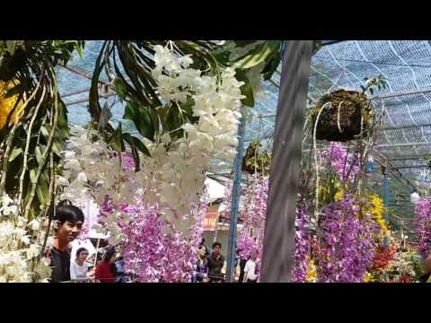 Hội thi hoa lan Daklak 🌼🌼🌼