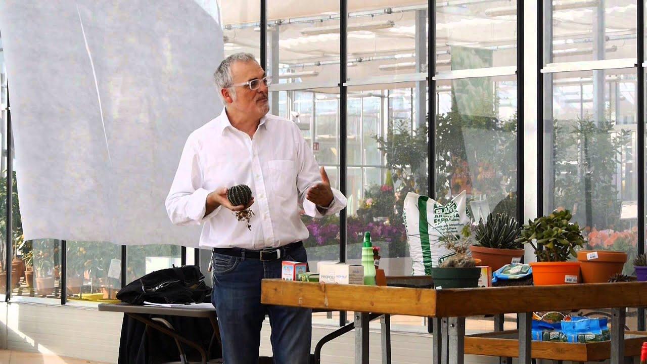 Come annaffiare le piante grasse youtube for Annaffiare le piante