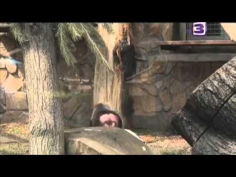 Видео Рим смотреть фильм онлайн 2005