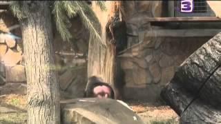 Снежный Человек - Йети Документальный Фильм (ТВ-3)