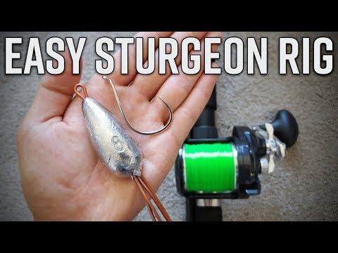 2 EASY Rigs For Bank Sturgeon Fishing