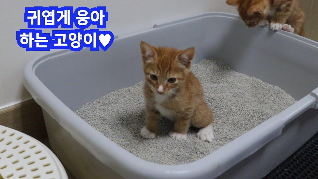 아기고양이들의 화장실 통갈이 DAY! 통갈이는 집사가 했는데, 지쳐보이는건 고양이들...!! ( feat. 에버샌드모래)