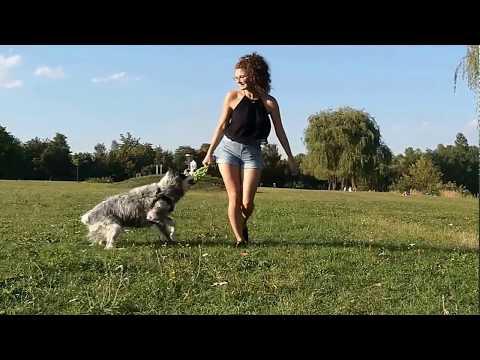 JW Pet Hol-ee Roller | test