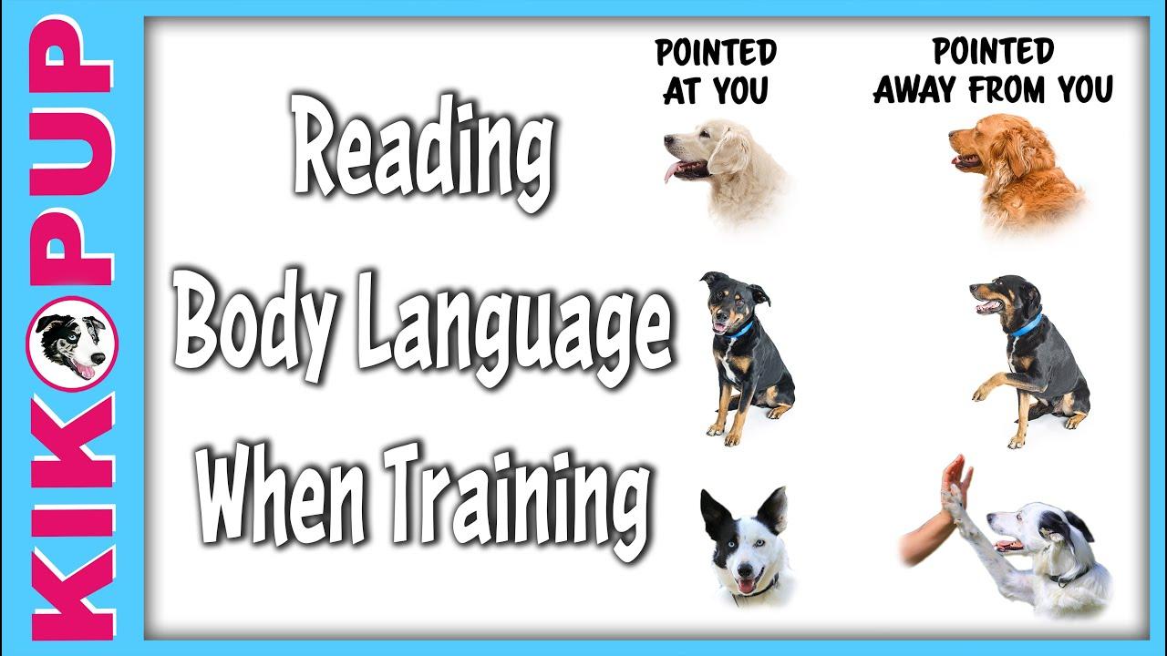 Body Language When Training