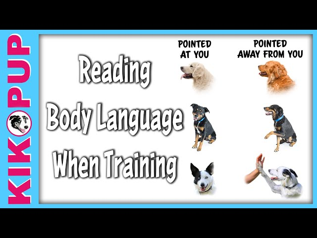 How to Read Your Dog's Body Language When Training
