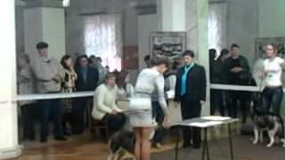 Выставка собак в городе Ростове-на-Дону