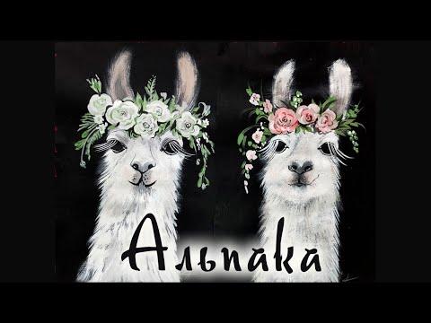 Вопрос: Это лама или альпака(см. картинку)?