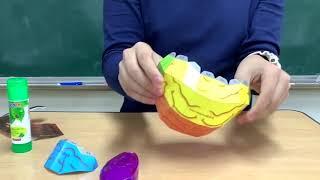 뇌 모형 제작