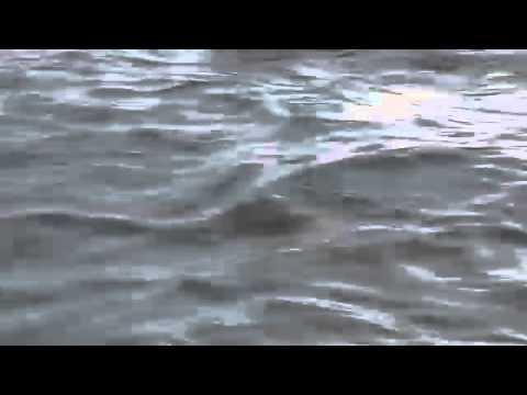 видео: Кабан на р. Кама