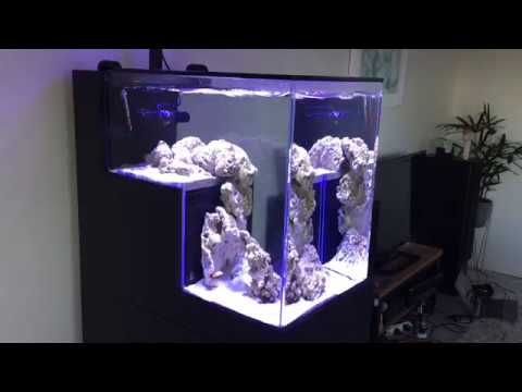 Peninsula drop off tank first fish youtube for First fish tank