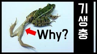 기생충은 왜 개구리 다리를 이렇게 만들었을까?(기생충의 과학-1)