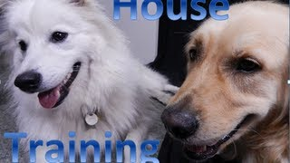 House Training Your Puppy or Dog!