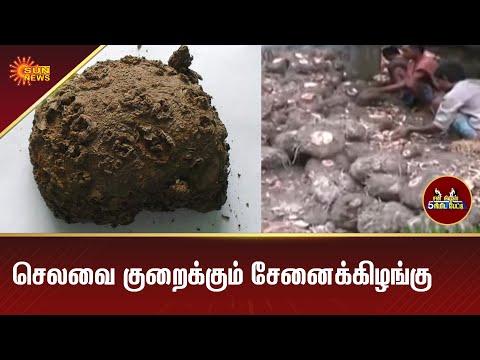 விவசாயிகளுக்கு பயன் தரும் சேனைக்கிழங்கு | Yam | Agriculture | 5 Mins | Tamil News | Sun News