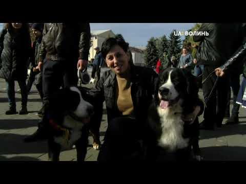 UA: ВОЛИНЬ: Парад Зенненхундів вперше серед європейських країн відбувся у Луцьку