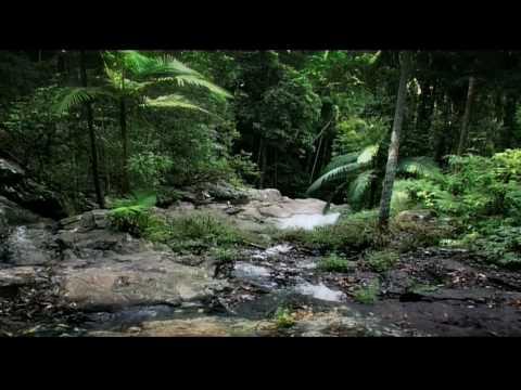 Rainforest: Beneath the Canopy Part 02