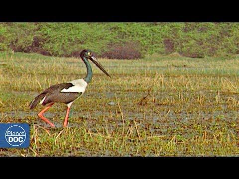 Parque nacional Keoladeo Ghana - Parte 1