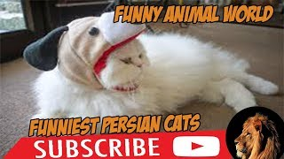 4 you  Funniest Persian cat Videos ( funny animal  Persian cat ) funny animal world