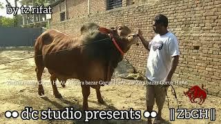 186 | ফিরে দেখা ২০১৮ | Deshal Bull | Show Time | Best of  Dairy Sun Agro | ZbGH 2019