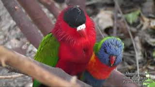 Beautiful Parrots At Loro Parque