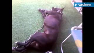 My perro jugando con hojas y yo dandole cosquillas