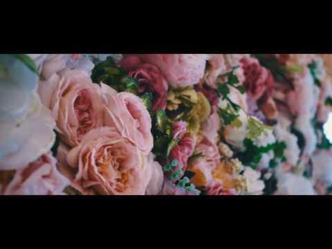 Чайно гибридные розы каталог саженцев, фото, цены