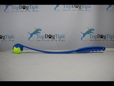 chuckit!-sport-launcher-dog-toy-review