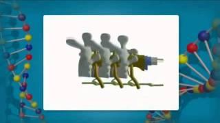 III Строение и функции спинного мозга