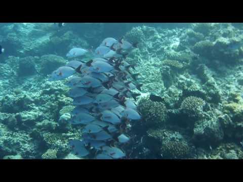 "Diving Maldives (Faafu Atoll) ""Sea Wildlife 1"""