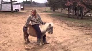 Minnie Dappled Pony
