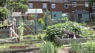 Sean's Allotment Garden: June Tour 2016