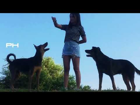 DTQ_Wow Cute Girl meeting funny Dogs At Home , Training Smart Dogs in Village Part 5