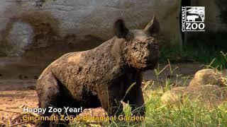 Happy Zoo Year from the Cincinnati Zoo!